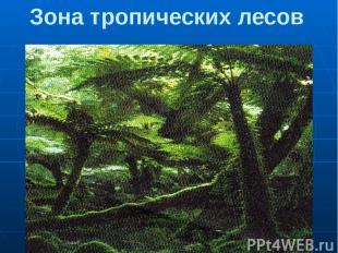 Зона тропических лесов Чем ближе к экватору, тем короче сухой период года. Там,