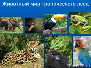 Животный мир тропического леса Муравьед 2. Колибри 3. Тукан 4. Древесная лягушка