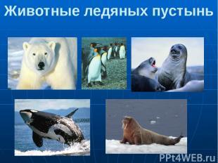Животные ледяных пустынь 1.Белый медведь 2.Императорский пингвин 3.Тюлени. 4. Ка