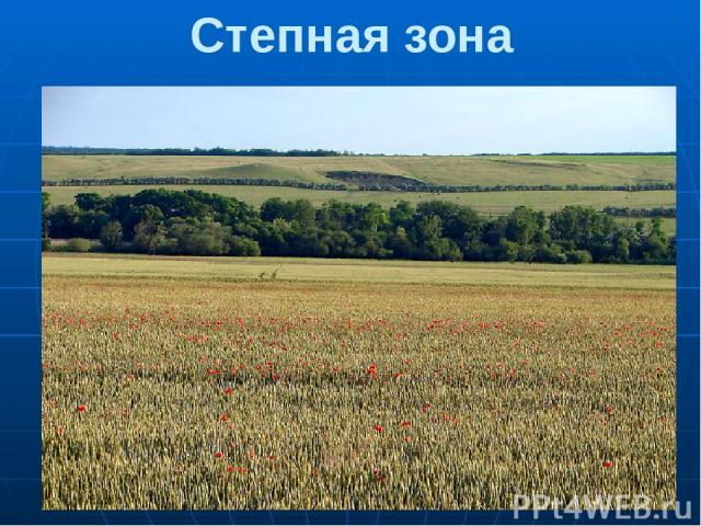 Степная зона Степи – это травяные равнины. Степь – одно из самых благоприятных мест для жизни.За 1 сезон степные растения вырастают до 1 метра, а кукуруза даже выше человеческого роста. Верхний слой земли в степи – чернозем – самая плодородная почва…