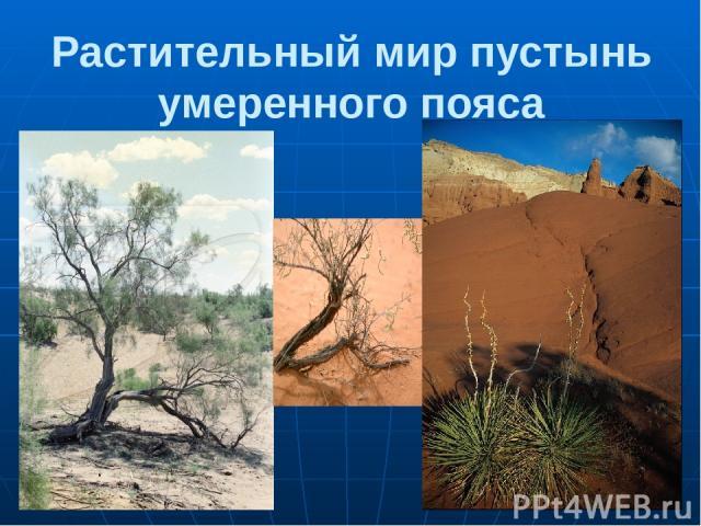 Растительный мир пустынь умеренного пояса 1.Саксаул 2.Верблюжья колючка 3.Суккулент