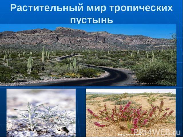 Растительный мир тропических пустынь 1. Кактусы 2,3. Солянка