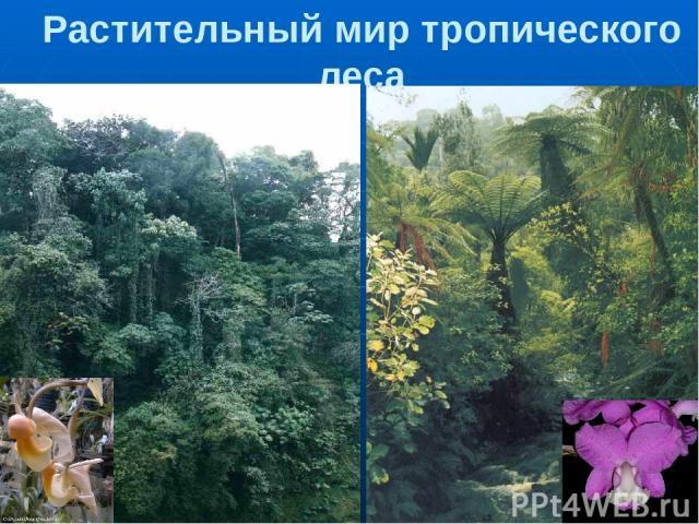 Растительный мир тропического леса 1,2. Многоярусный тропический лес. С высоких деревьев спускаются лианы. 3,4. Орхидеи поселяются прямо на ветвях деревьев, чтобы достичь света. Яркие цветки привлекают насекомых для опыления.