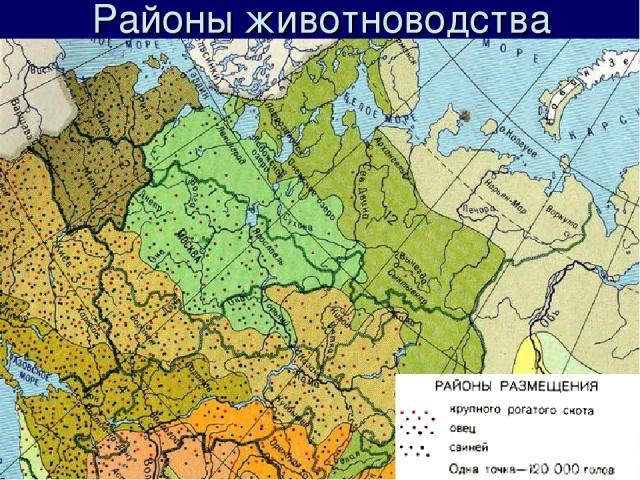 Районы животноводства