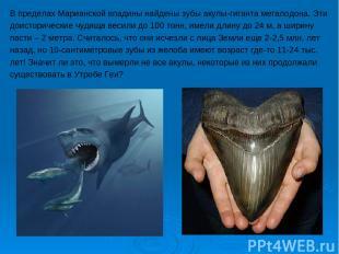 В пределах Марианской впадины найдены зубы акулы-гиганта мегалодона. Эти доистор
