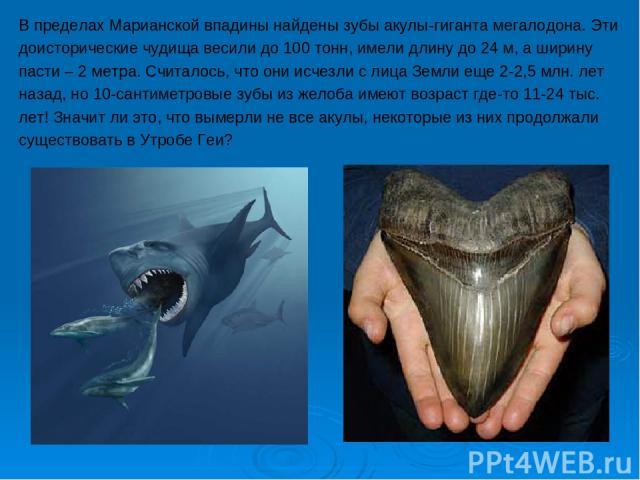 В пределах Марианской впадины найдены зубы акулы-гиганта мегалодона. Эти доисторические чудища весили до 100 тонн, имели длину до 24 м, а ширину пасти – 2 метра. Считалось, что они исчезли с лица Земли еще 2-2,5 млн. лет назад, но 10-сантиметровые з…