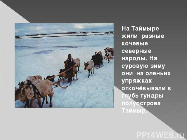 На Таймыре жили разные кочевые северные народы. На суровую зиму они на оленьих упряжках откочёвывали в глубь тундры полуострова Таймыр.