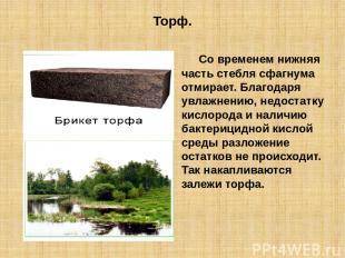 Торф. Со временем нижняя часть стебля сфагнума отмирает. Благодаря увлажнению, н