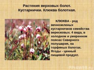 Растения верховых болот. Кустарнички. Клюква болотная. КЛЮКВА - род вечнозеленых