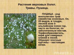 Растения верховых болот. Травы. Пушица. ПУШИЦА - род многолетних трав семейства