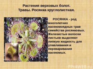 Растения верховых болот. Травы. Росянка круглолистная. РОСЯНКА - род многолетних