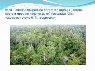 Леса – важное природное богатство страны (шестое место в мире по лесопокрытой пл