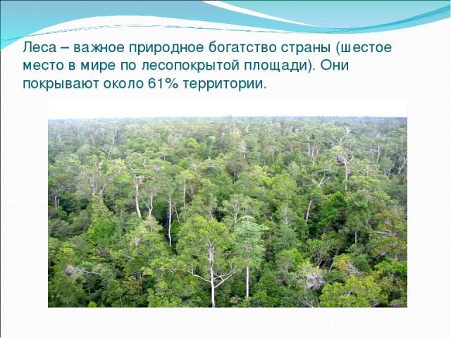 Леса – важное природное богатство страны (шестое место в мире по лесопокрытой площади). Они покрывают около 61% территории.