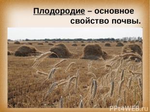 Плодородие – основное свойство почвы.