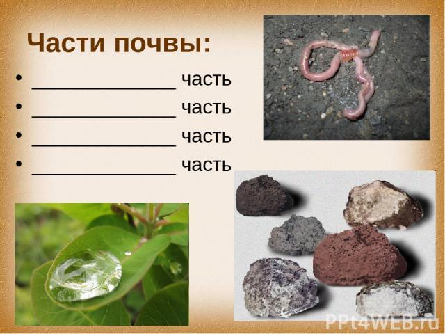 Части почвы: _____________ часть _____________ часть _____________ часть _____________ часть