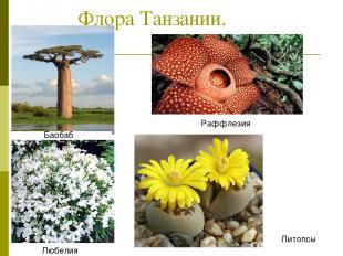 Флора Танзании. Баобаб Раффлезия Любелия Литопсы