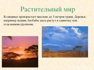 Растительный мир В саваннах произрастает высокие до 3 метров травы. Деревья, нап