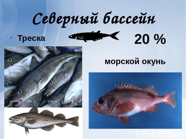 Северный бассейн Треска морской окунь 20 %