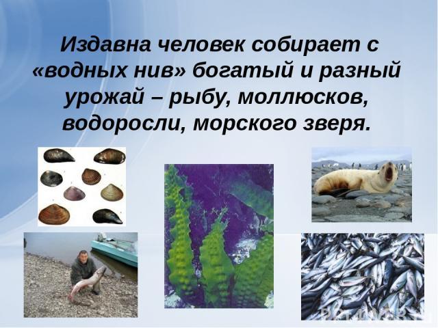 Издавна человек собирает с «водных нив» богатый и разный урожай – рыбу, моллюсков, водоросли, морского зверя.