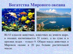 Богатства Мирового океана Из 63 классов животных, известных на земном шаре, в ок