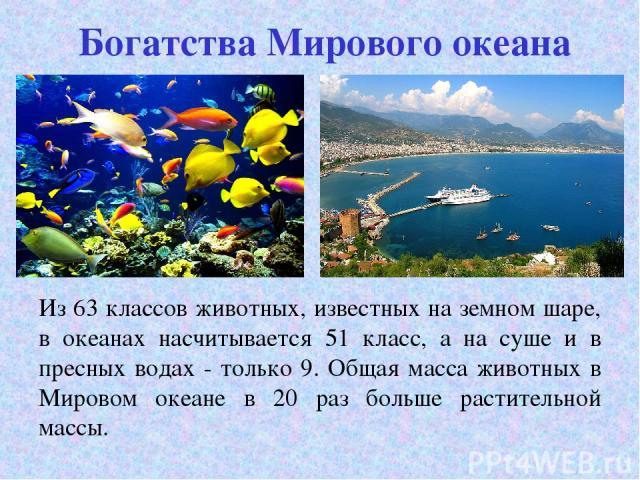 Богатства Мирового океана Из 63 классов животных, известных на земном шаре, в океанах насчитывается 51 класс, а на суше и в пресных водах - только 9. Общая масса животных в Мировом океане в 20 раз больше растительной массы.