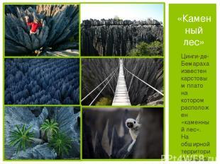 Цинги-де-Бемараха известен карстовым плато на котором расположен «каменный лес».