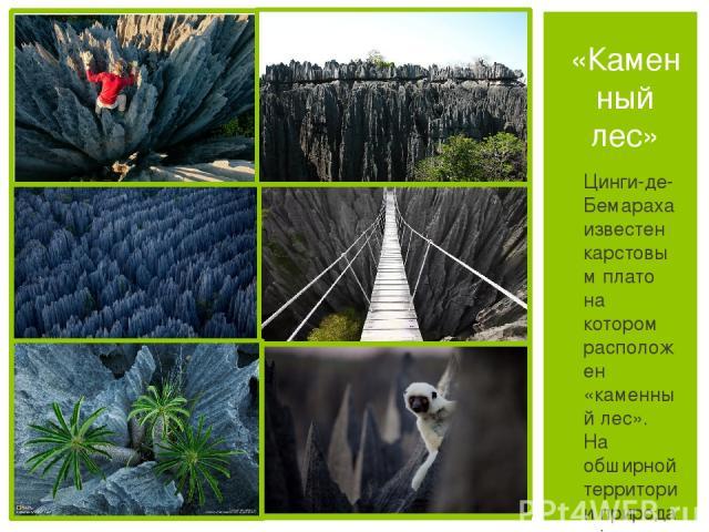Цинги-де-Бемараха известен карстовым плато на котором расположен «каменный лес». На обширной территории природа сформировала множество остроконечных пиков и скал известнякового происхождения. Также в составе заповедника множество болот, мангровых за…