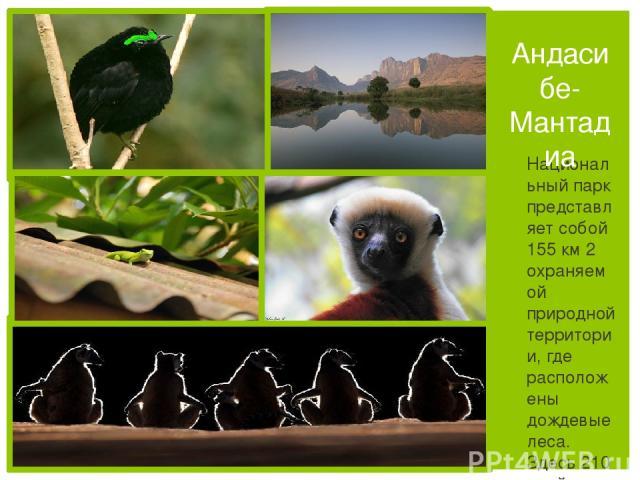 Национальный парк представляет собой 155 км 2 охраняемой природной территории, где расположены дождевые леса. Здесь 210 дней в году идут дожди Андасибе-Мантадиа