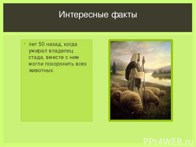 лет 50 назад, когда умирал владелец стада, вместе с ним могли похоронить всех животных. Интересные факты