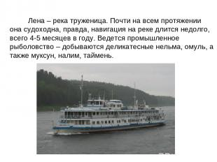 Лена – река труженица. Почти на всем протяжении она судоходна, правда, навигация