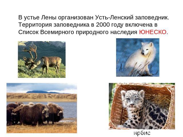 В устье Лены организован Усть-Ленский заповедник. Территория заповедника в 2000 году включена в Список Всемирного природного наследия ЮНЕСКО. ирбис
