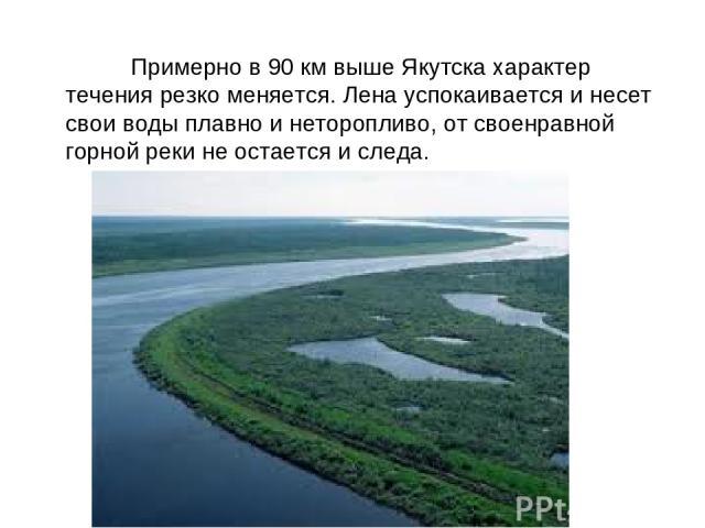 Примерно в 90 км выше Якутска характер течения резко меняется. Лена успокаивается и несет свои воды плавно и неторопливо, от своенравной горной реки не остается и следа.