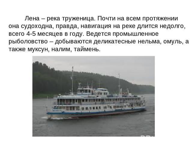 Лена – река труженица. Почти на всем протяжении она судоходна, правда, навигация на реке длится недолго, всего 4-5 месяцев в году. Ведется промышленное рыболовство – добываются деликатесные нельма, омуль, а также муксун, налим, таймень.