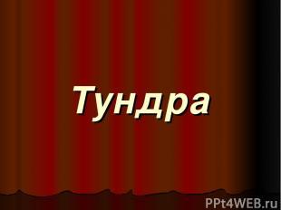 Тундра