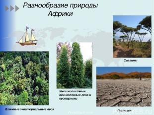 Разнообразие природы Африки Влажные экваториальные леса Пустыня Саванны Жестколи