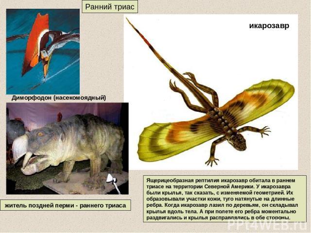 Ранний триас житель поздней перми - раннего триаса Ящерицеобразная рептилия икарозавр обитала в раннем триасе на территории Северной Америки. У икарозавра были крылья, так сказать, с изменяемой геометрией. Их образовывали участки кожи, туго натянуты…