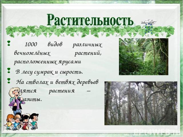 1000 видов различных вечнозелёных растений, расположенных ярусами В лесу сумрак и сырость. На стволах и ветвях деревьев селятся растения – паразиты.