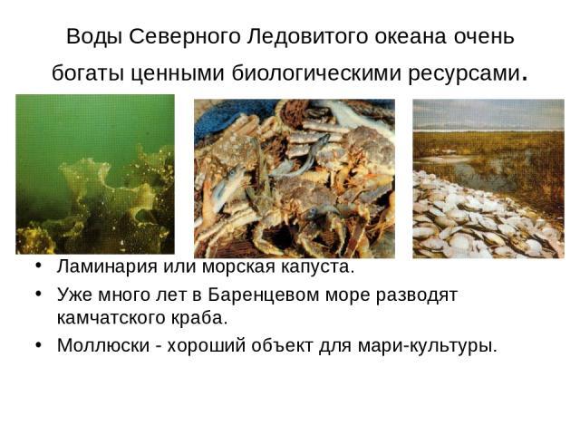 Воды Северного Ледовитого океана очень богаты ценными биологическими ресурсами. Ламинария или морская капуста. Уже много лет в Баренцевом море разводят камчатского краба. Моллюски - хороший объект для мари-культуры.