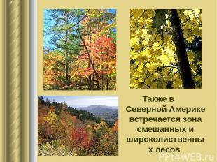Также в Северной Америке встречается зона смешанных и широколиственных лесов