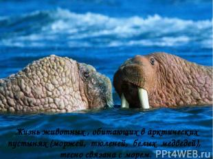 Жизнь животных , обитающих в арктических пустынях (моржей, тюленей, белых медвед