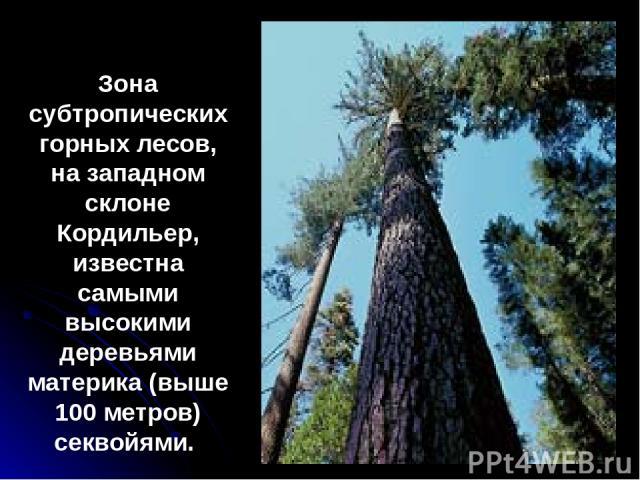Зона субтропических горных лесов, на западном склоне Кордильер, известна самыми высокими деревьями материка (выше 100 метров) секвойями.