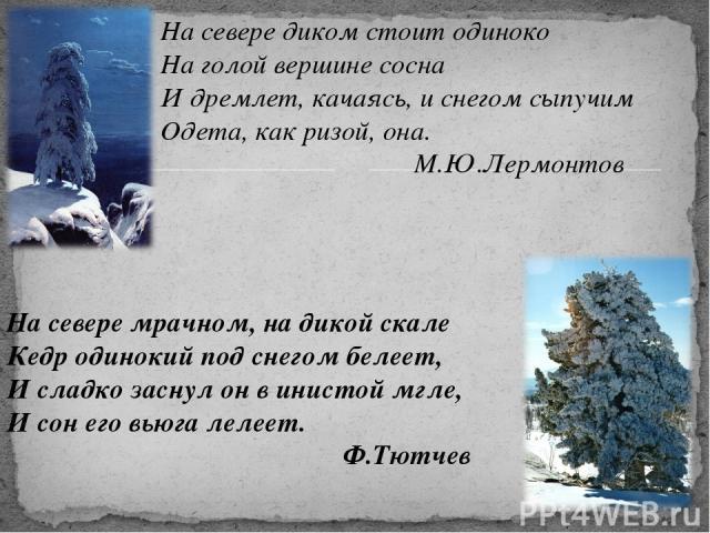 На севере диком стоит одиноко На голой вершине сосна И дремлет, качаясь, и снегом сыпучим Одета, как ризой, она. М.Ю.Лермонтов На севере мрачном, на дикой скале Кедр одинокий под снегом белеет, И сладко заснул он в инистой мгле, И сон его вьюга леле…