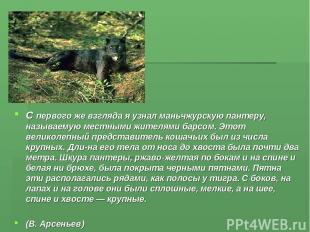 С первого же взгляда я узнал маньчжурскую пантеру, называемую местными жителями