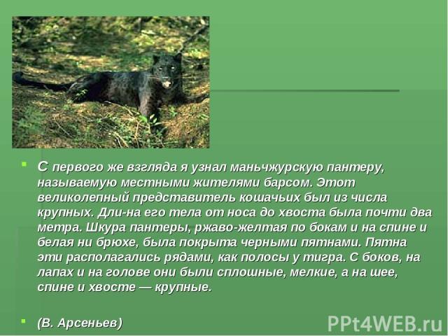 С первого же взгляда я узнал маньчжурскую пантеру, называемую местными жителями барсом. Этот великолепный представитель кошачьих был из числа крупных. Дли на его тела от носа до хвоста была почти два метра. Шкура пантеры, ржаво-желтая по бокам и на …