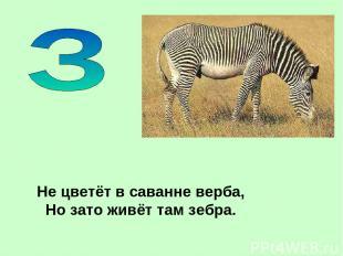 Не цветёт в саванне верба, Но зато живёт там зебра.