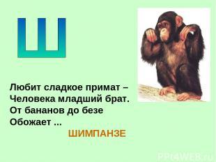 Любит сладкое примат – Человека младший брат. От бананов до безе Обожает ... ШИМ