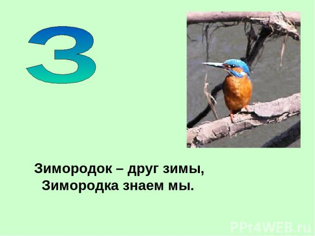 Зимородок – друг зимы, Зимородка знаем мы.