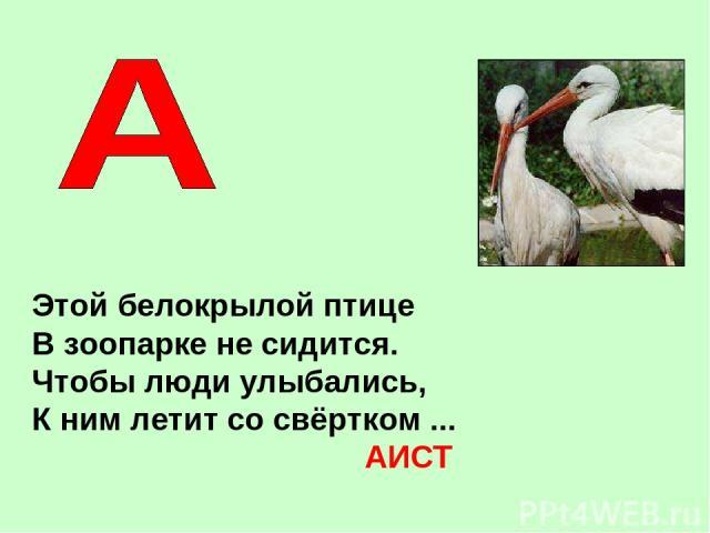 Этой белокрылой птице В зоопарке не сидится. Чтобы люди улыбались, К ним летит со свёртком ... АИСТ