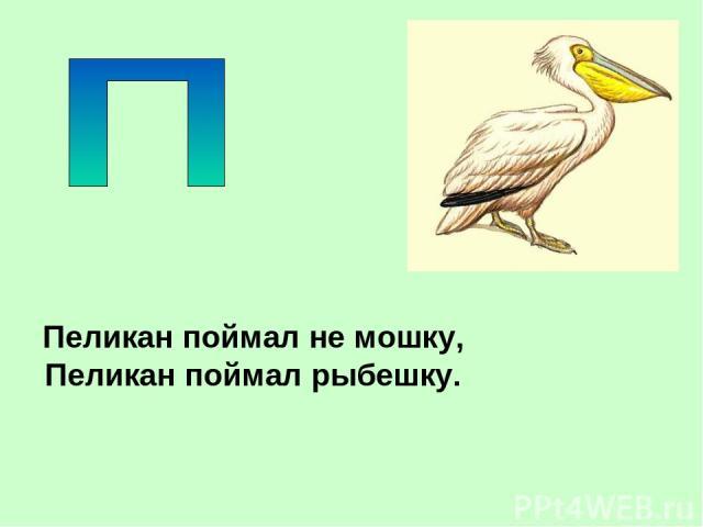 Пеликан поймал не мошку, Пеликан поймал рыбешку.