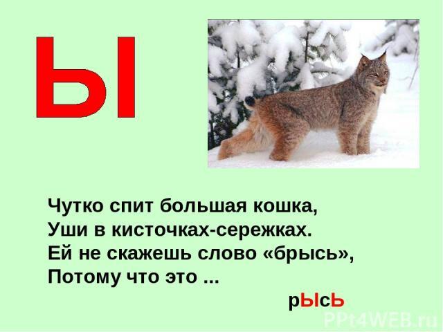 Чутко спит большая кошка, Уши в кисточках-сережках. Ей не скажешь слово «брысь», Потому что это ... рЫсЬ